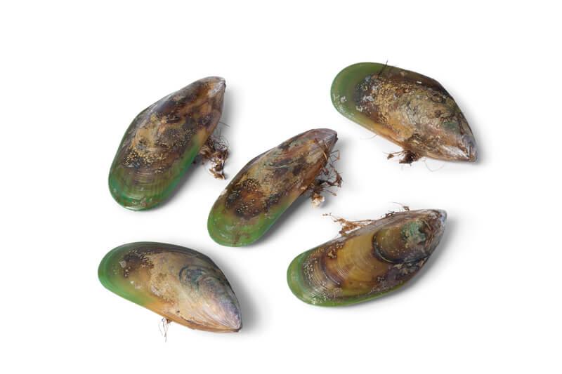 groenlipmossel